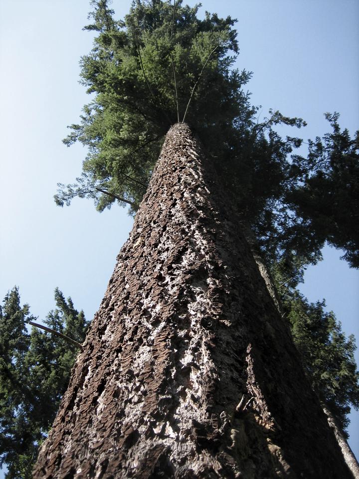 Wissen Wertvolles Fachwissen Von Unseren Holz Experten